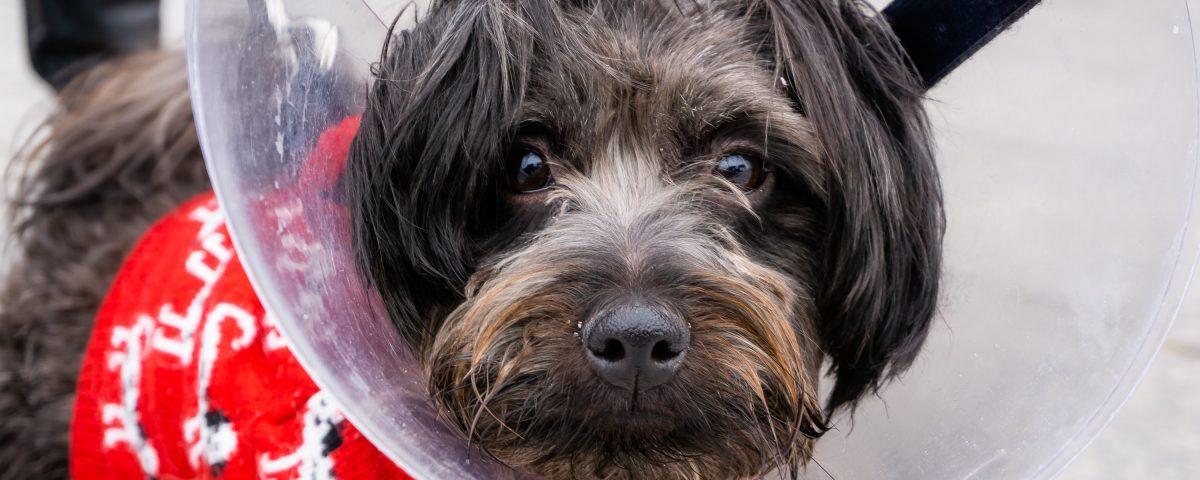 A cute dog visits the veterinarian